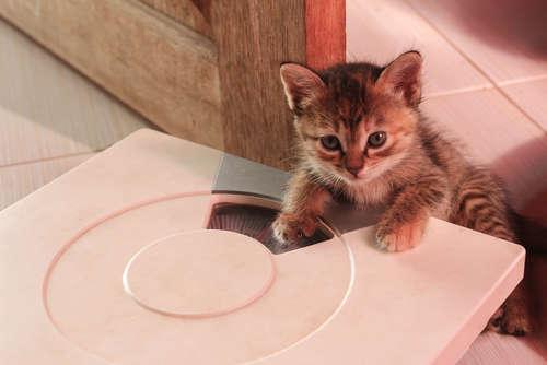 【獣医師監修】生後2ヶ月の仔猫の体重、どれくらい? エサの種類や与え方について