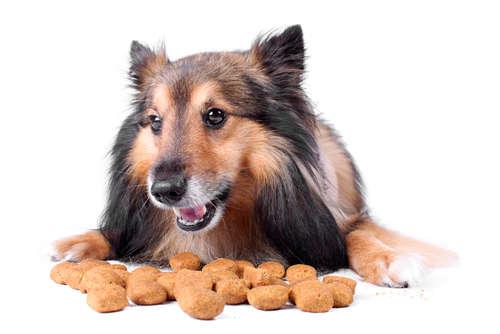 愛犬が食べ物を噛まないで食べる。放っておいても大丈夫?