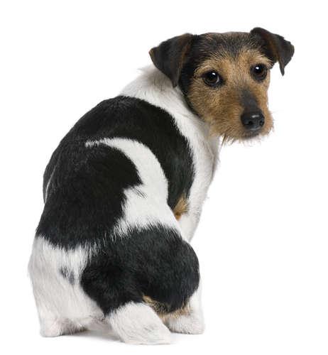 【獣医師監修】犬が飼い主に背中を向ける。この行動の意味とは?