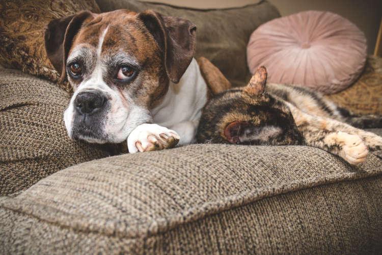 老化のサイン、見逃さないで! ペットの介護を快適にするために、知っておきたい症状と対策