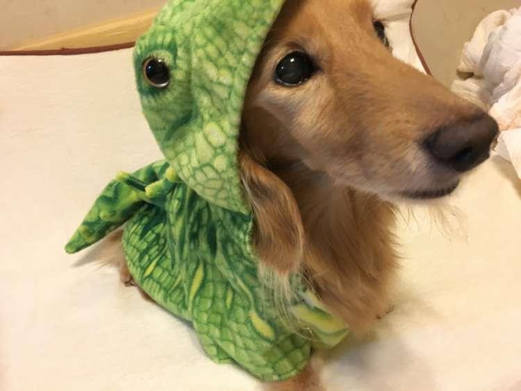 「僕は恐竜になってみたよ♪」
