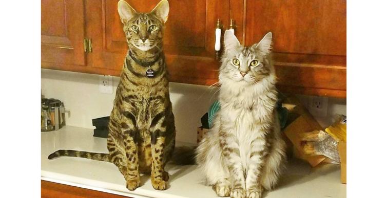 お互いに「最もなが~い」ギネス記録を持つ、2匹の猫たち。その長さに思わずビックリ(*'∀')! 9枚
