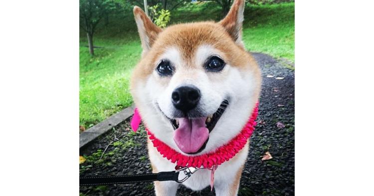 【愛に包まれて…♡】新しいお家で幸せな表情を見せる元保護犬たち。その笑顔を集めました(11枚)