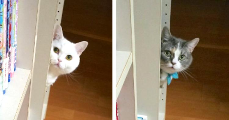【猫用スペース♡】本棚を整理する度に子供たちが、猫のために作る空間。その愛情に思わずキュン♡