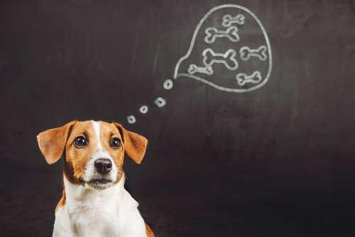 """ペットのためにできる""""動物福祉""""とは? シンポジウムを通して考えるペットとの未来"""