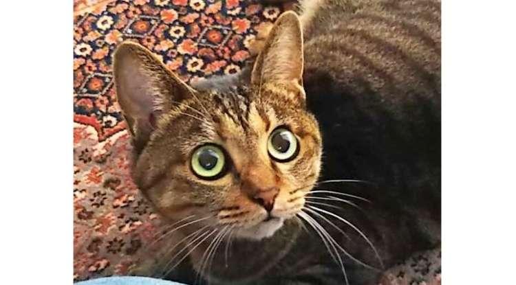 """ごはんの「ご」を聞いただけで、目をキラキラさせる猫の """"ピュアすぎる反応"""" が話題に…♡ (4枚)"""