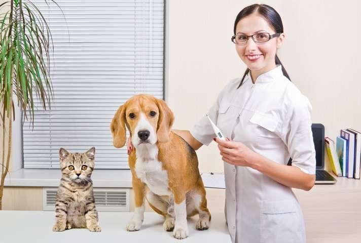「これだけはお願い」「じつはどうなの?」飼い主さんが獣医師さんと、上手につきあうためのポイント13
