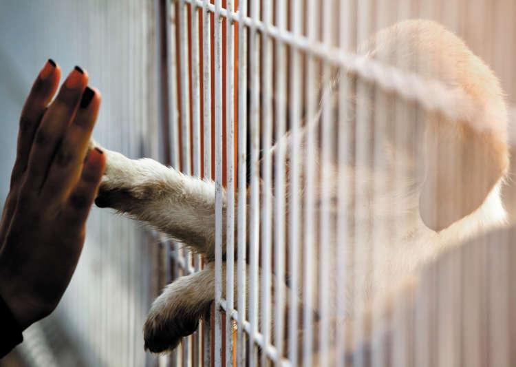 犬猫を殺処分から救うために。支援物資を送りませんか?