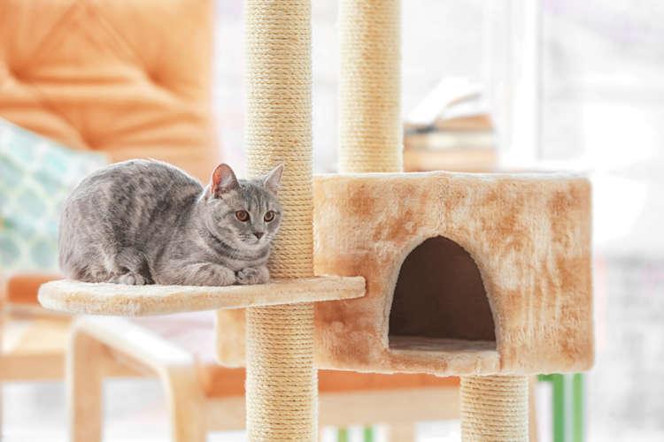 猫のペットホテルの料金相場はどのくらい? 割引などはあるの?