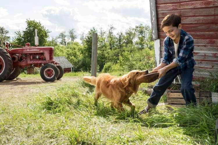 犬と人間の極上のラブストーリー  ー映画『僕のワンダフル・ライフ』