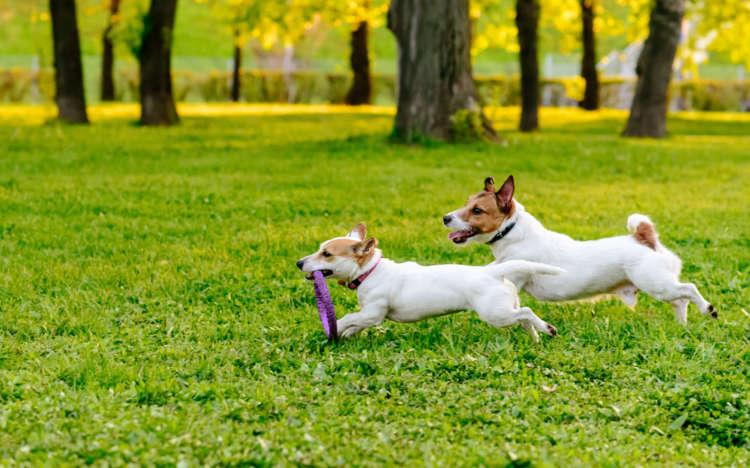 愛犬とお出かけのベストシーズンがやってきた! 2017年10月〜12月の関東近郊のイベントを公開