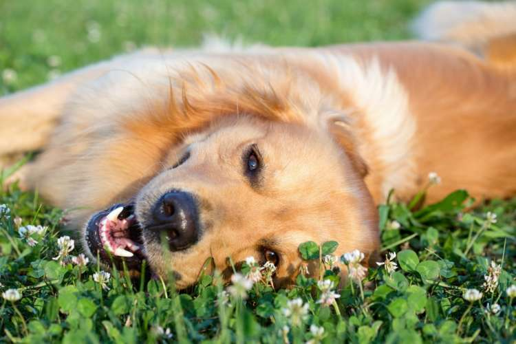 犬の避妊手術 時期や方法、費用、術後のケアについて