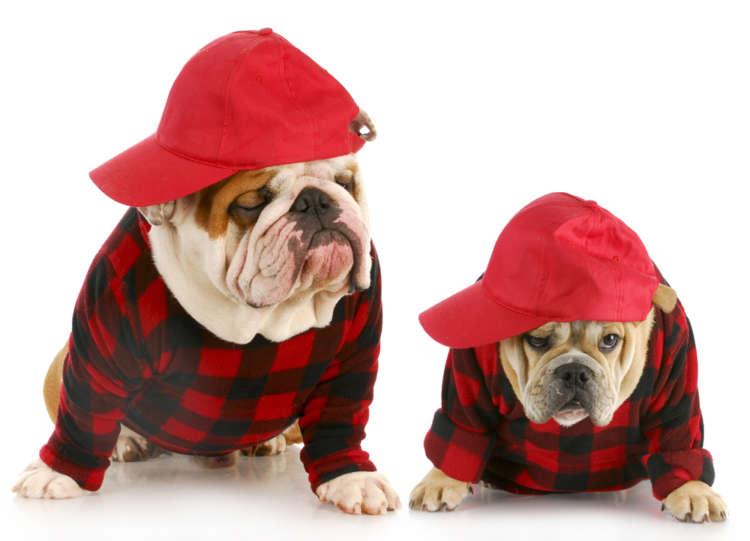 犬とペアルックしちゃおう。ペアルックで注目の的に!