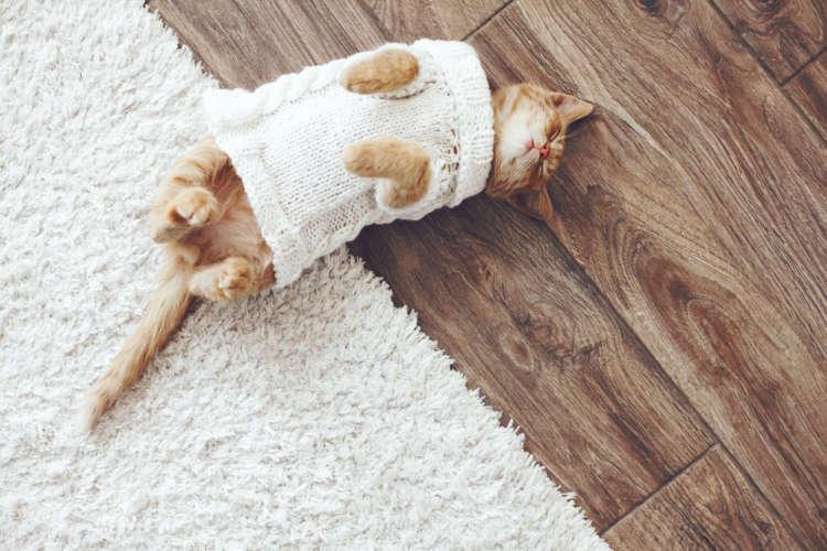 猫に可愛い服を着せたい! 型紙から作るおしゃれな手作り猫服