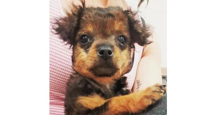 「足が麻痺している」と病院に持ち込まれ、置き去りにされた子犬。 診察をうけ、その運命が変わるまで…