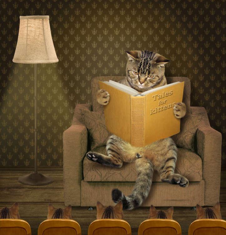 2017年10月~12月、芸術の秋ならではの見逃せにゃい【猫イベント】を紹介