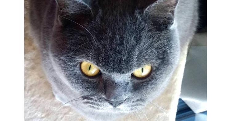 コワモテ猫のアールグレイくん。思わず「ボス!」と呼びたくなる、貫禄あふれる写真集(8枚)