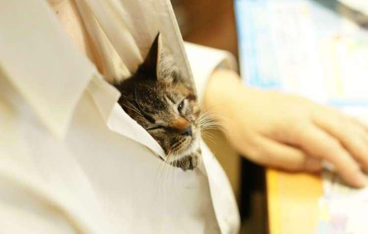 お父さんの胸元にスッポリ! 保護された子猫が見つけた、ポカポカな『定位置』がかわいすぎた♡ 4枚