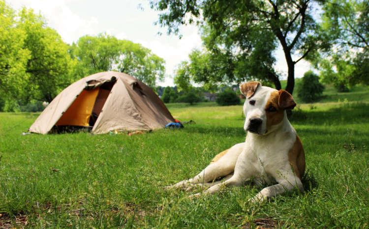 爽やかな秋空を満喫! ワンコと一緒に楽しめる関東近郊のキャンプスポット