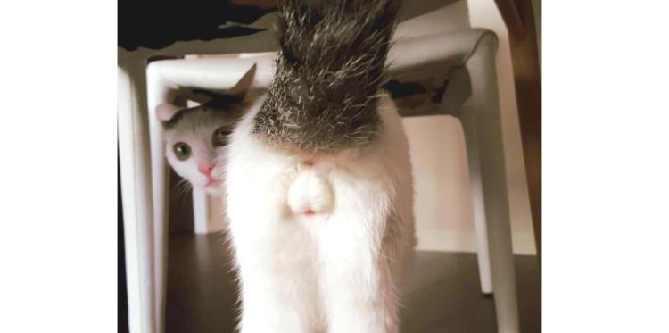 【かわいいけれど、恥ずかしい♡】猫たちのモッフモフな『にゃんたま』写真集8枚…(*ノェノ)