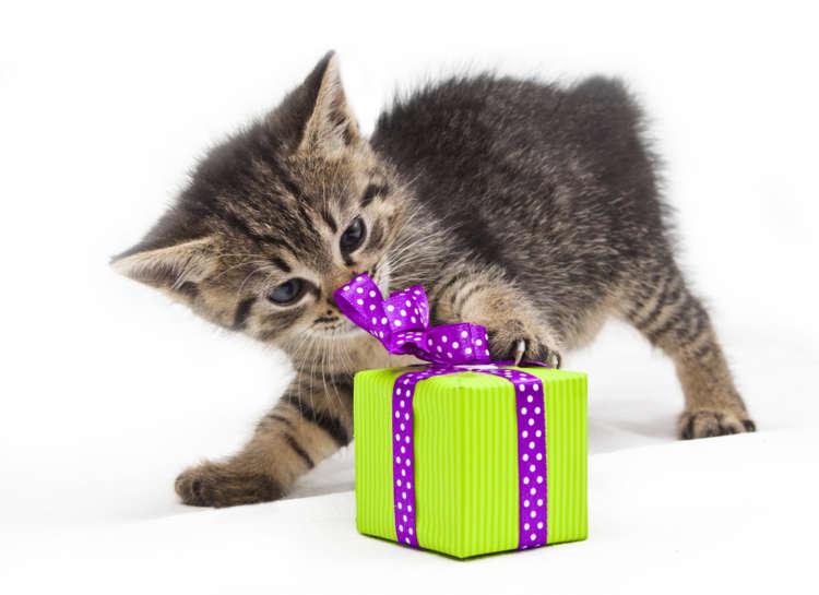 猫へのプレゼント、何をあげたら喜んでもらえる?
