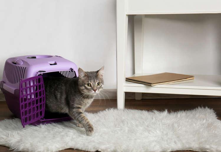 猫をペットショップから迎える。その際の注意点とは