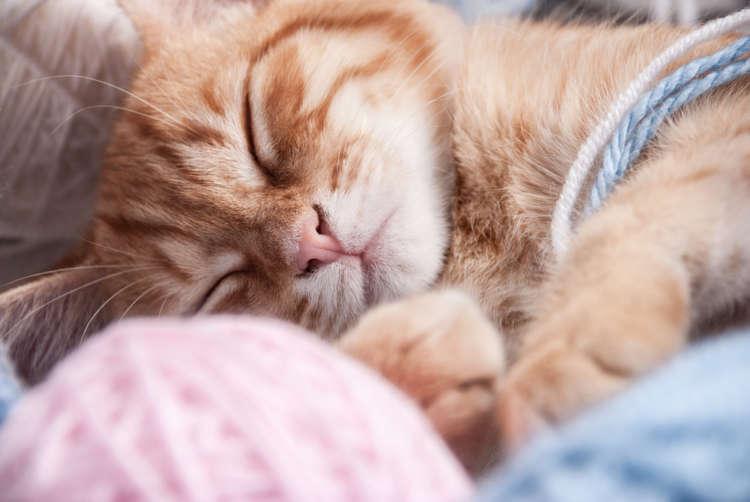 「猫」の語源は「寝子」だけじゃない? 様々な「猫」の由来