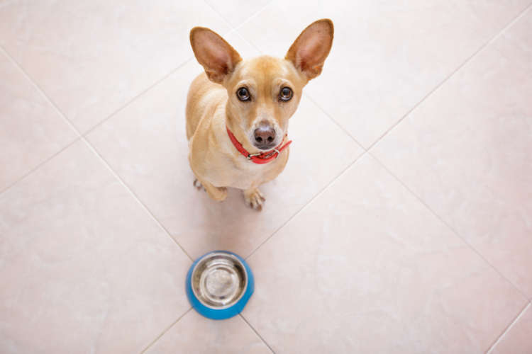 犬にレタスを与えていい? レタスのメリットと注意点について
