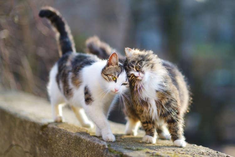 【獣医師監修】猫のしっぽの機能や、 しっぽから読み取る猫の心理