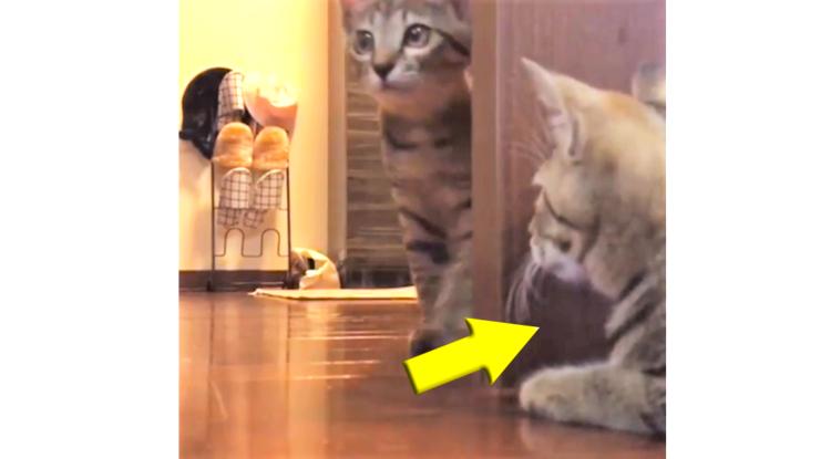 【待ち伏せ中】物陰からドッキリを仕掛ける子ネコ。ターゲットと目が合った瞬間…(; ・`д・´)!