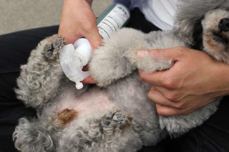 飼い主さんもツラい犬の皮膚病。天然成分100%のペット用化粧水『アヴァンス』でお手軽ホームケア
