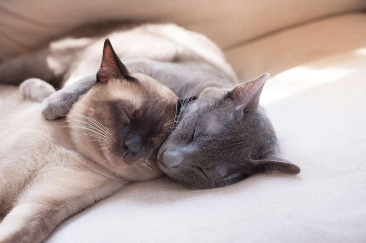 猫に生理はあるの? 発情期の時期や対策について