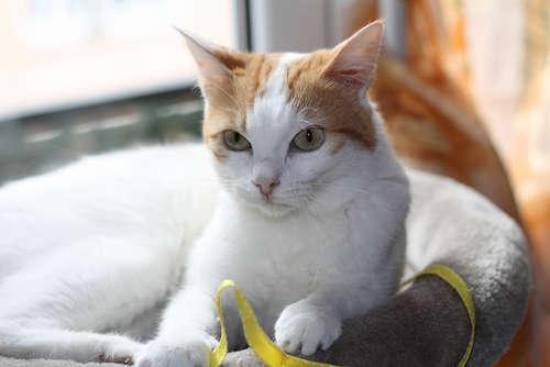 猫の柄・模様の種類を紹介! 柄・模様と性格の関係は?(PECO ...