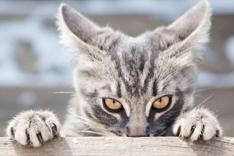 こんな時は猫のストレスサイン? 行動から読み取るストレスと、疾病について
