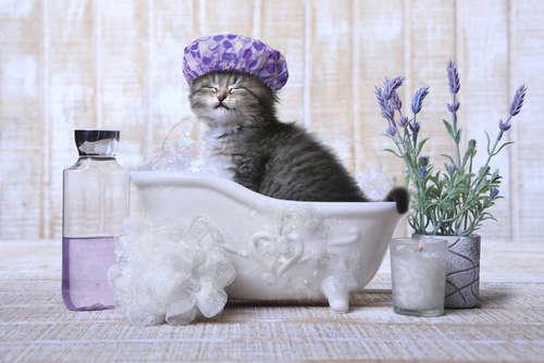 【獣医師監修】仔猫はいつからお風呂に入れてもいい? 注意すべき点について