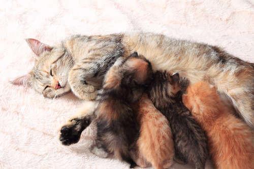 猫の出産が多いのはいつの時期? 発情期についても解説