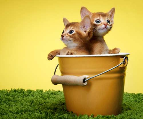 今は生後何ヶ月? 仔猫の年齢の見分け方について