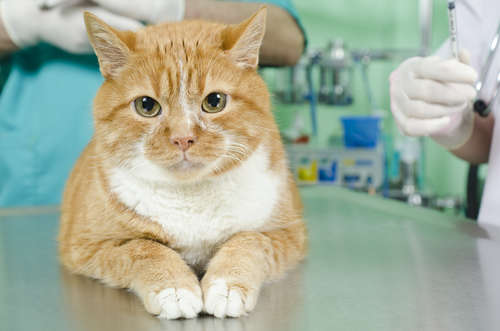 【獣医師監修】動物病院でかかる猫の治療費。その目安はどのくらい?