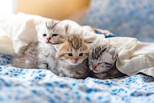 【獣医師監修】仔猫がうんちをしない。仔猫の便秘の症状や改善方法について