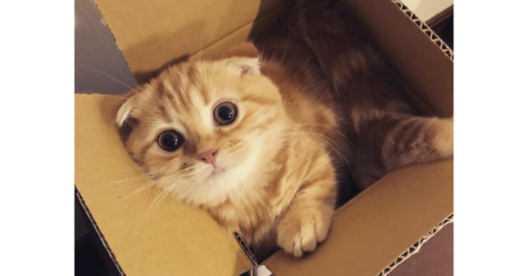 【ぴったりニャッ♡】箱の中にすっぽり入ってご満悦なニャンコたち。くつろぎまくりな10枚(*´艸`)