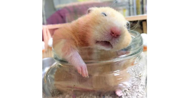 ひんやりな小瓶のトイレで熟睡するハムスター♪ 緩みきった表情が「疲れも吹きとぶ!」と話題に♡