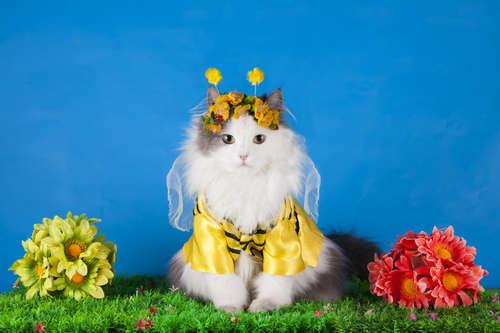 【獣医師監修】猫にはちみつを与えても大丈夫? はちみつのメリットと注意点について