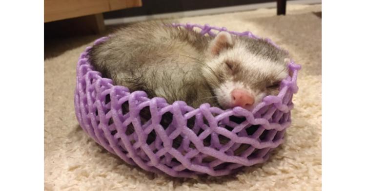 【ジャストフィット】果物のネットに、くるんと収まるフェレット。幸せいっぱいな寝顔に… キュン♡
