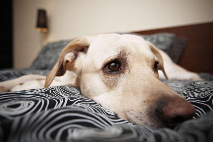 犬の急性膵炎 考えられる原因や症状、治療法と予防法