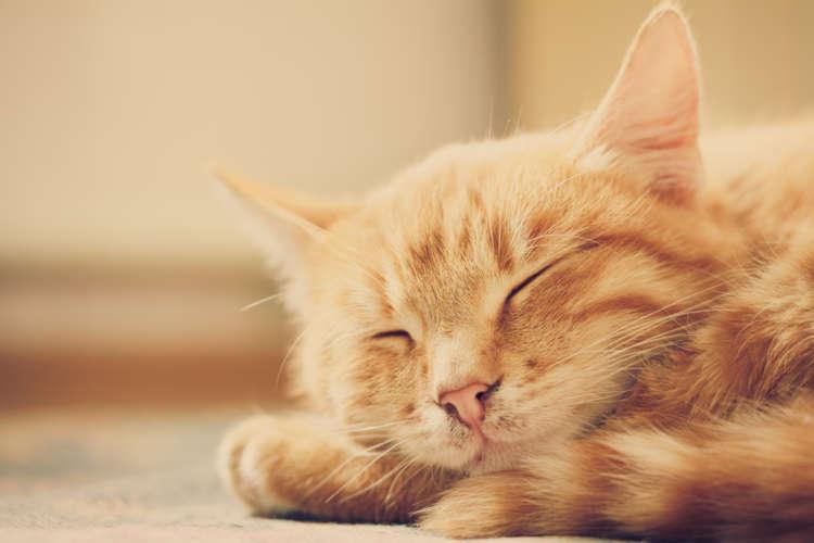 猫に快適に過ごしてもらうために。猫にとっての適温ってどのくらい?