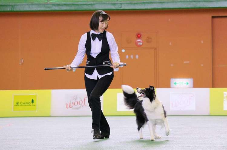 Image result for 犬 border collie 踊る