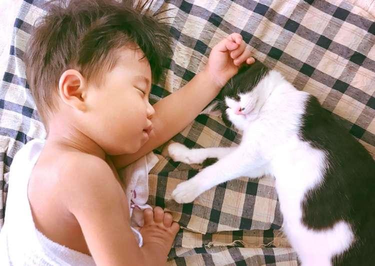【出会って2日目でラブラブ♡】眠る時はいつも一緒な男の子と保護ネコに、ほっこりが止まらない♪10枚