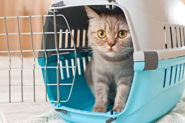 猫って飛行機に乗れる? 猫を飛行機に乗せる際の注意点や搭乗の流れについて
