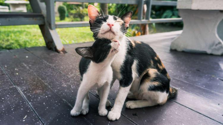 仔猫をもらう時の参考にも。猫が親離れをする時期について
