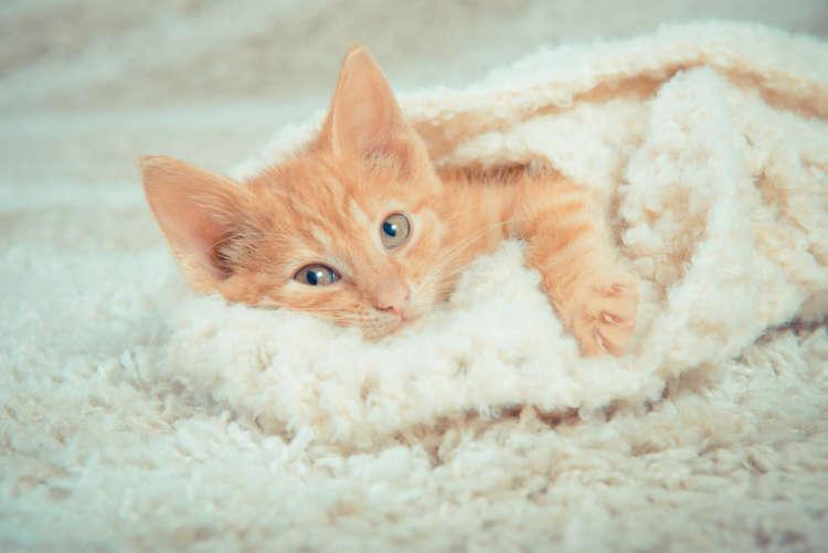 猫の飼い方の初歩。はじめて猫を飼う前に知っておくべきこと